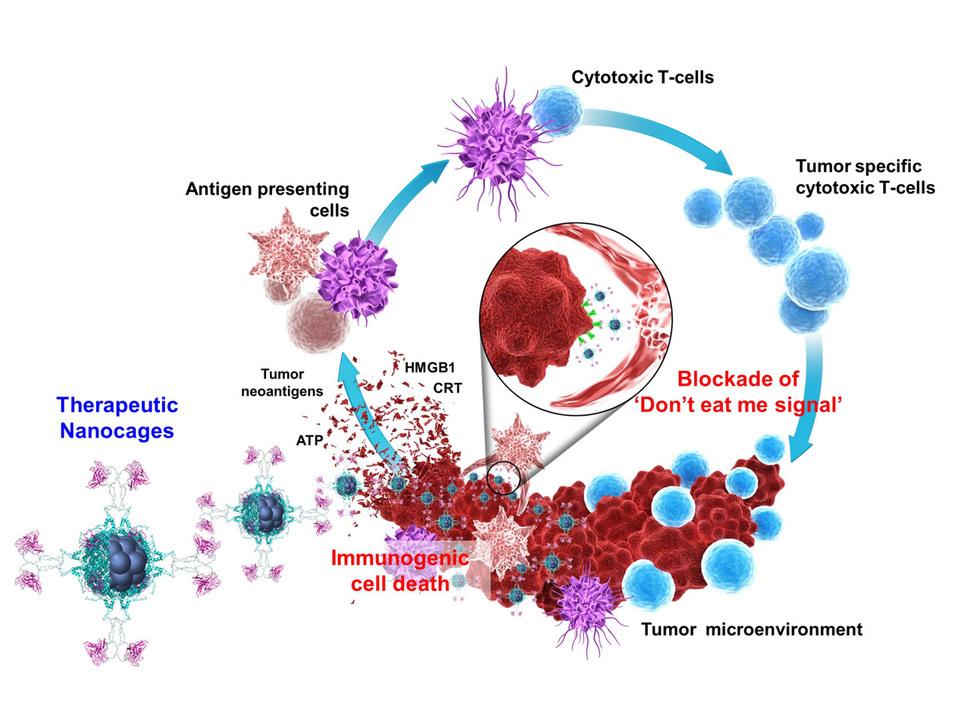 항암면역 나노입자의 항암 치료 모식도. 한국과학기술연구원 제공