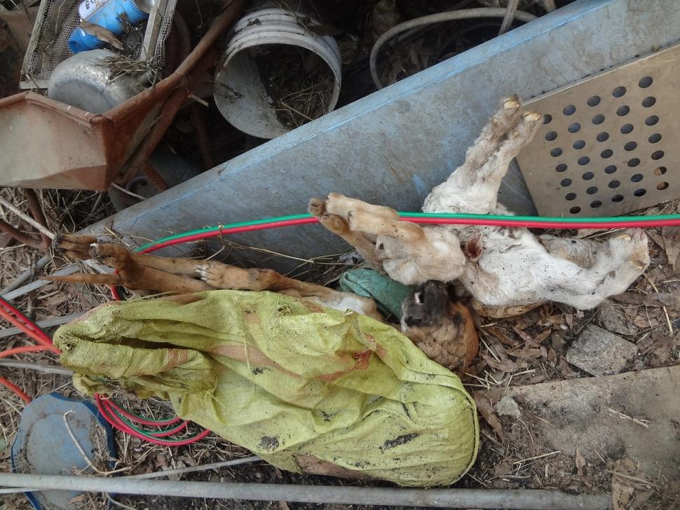 죽은 개와 죽은 양이 방치돼있었다.