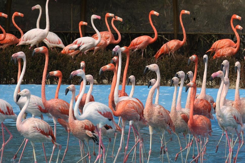 2009년 서울대공원 동물원에서 홍학쇼가 열리고 있다. 홍학쇼는 2013년 폐지됐다.  신소영 기자  viator@hani.co.kr