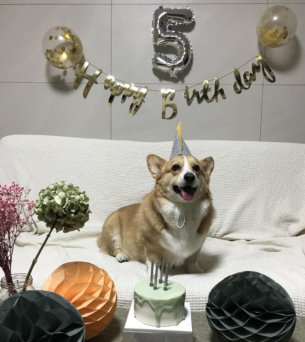 지난 5일 5번째 생일을 맞은 웰시코기 달래에게 반려인 정지희씨가 생일상을 차려줬다.