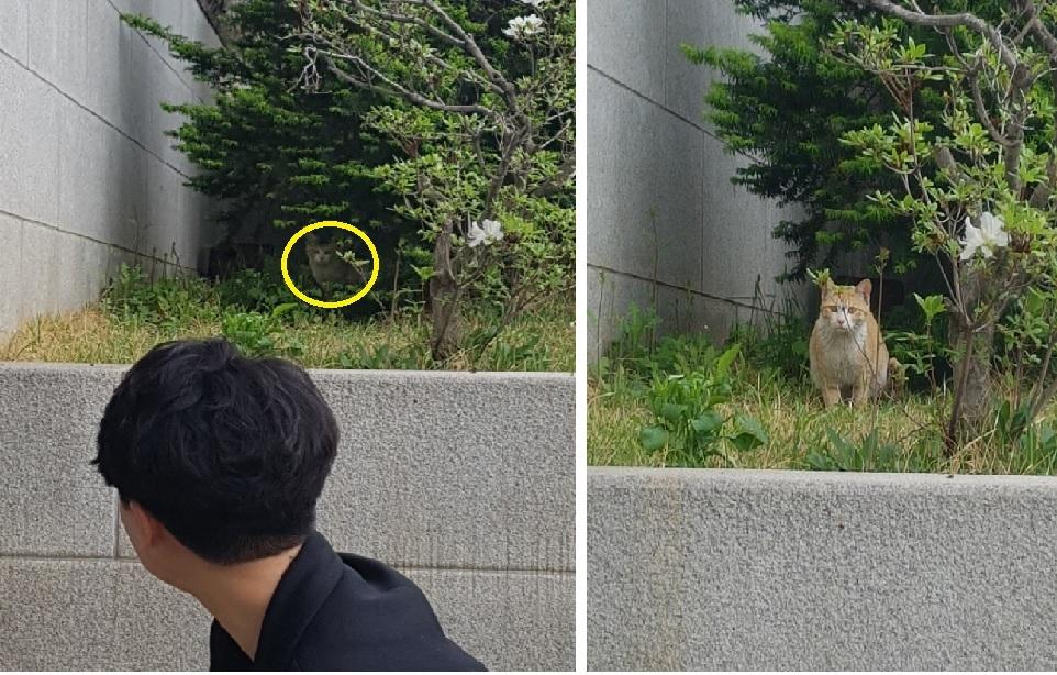 국회 캣맘들의 활동을 지켜보고 있는 고양이.