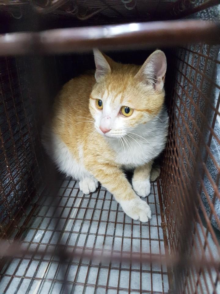 국회의원회관 인근에서 포획된 노란 줄무늬 고양이. 아기 고양이 시절부터 국회 캣맘들과 정을 쌓아온 고양이다.