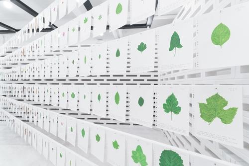 갤러리에 전시된 나뭇잎 그림들. 허윤희 작가 제공