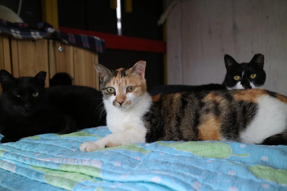 고양이들이 어울쉼터 내부에서 쉬고 있다.