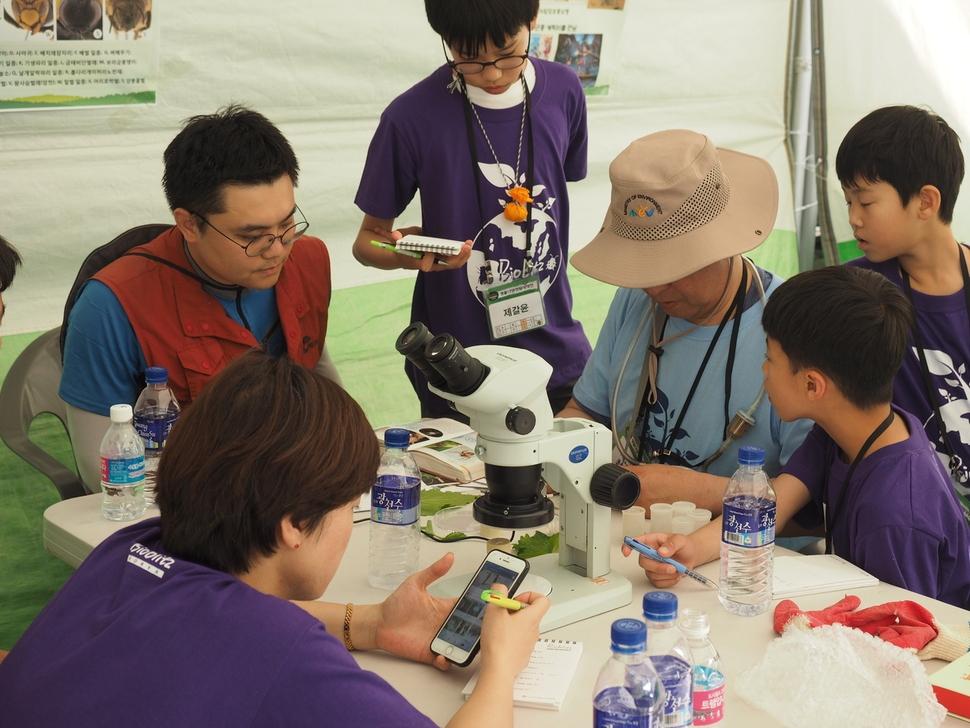 곤충 부스에서 준전문가들이 변봉규 한남대 교수와 함께 채집한 곤충을 분류하고 있다.