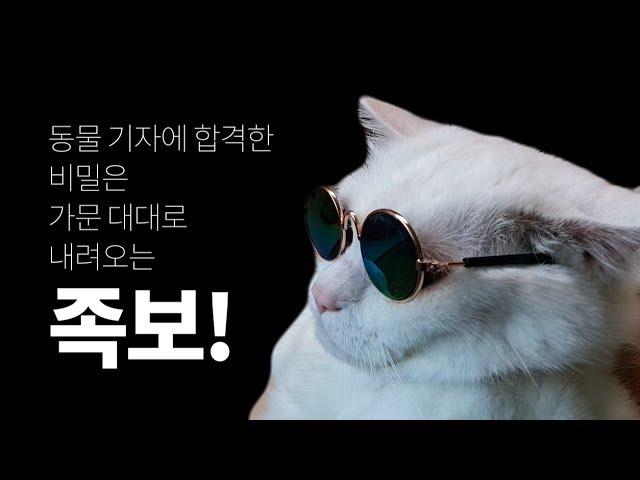 [영상] 30 번외편-국내 최초 고양이 기자 탄생의 비밀을 말한다