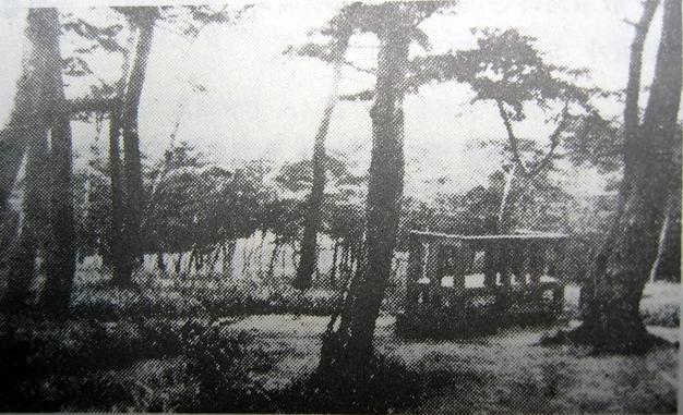 일제강점기 울창한 솔숲이 우거졌던 효창원의 옛 모습.