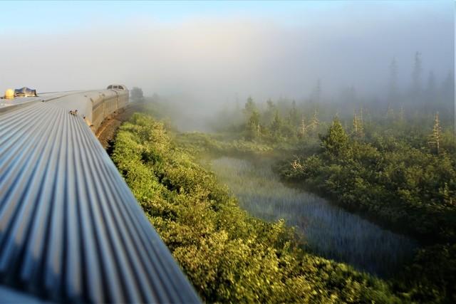 물안개 낀 숲과 습지대를 달리는 횡단열차.  이병학 선임기자