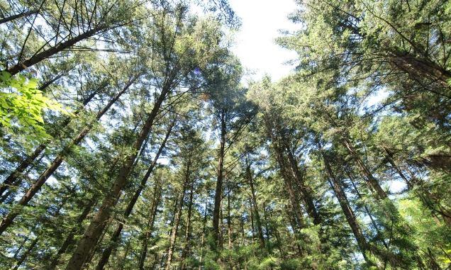 한여름 숲 냉각 효과 도심보다 3.4도 낮아