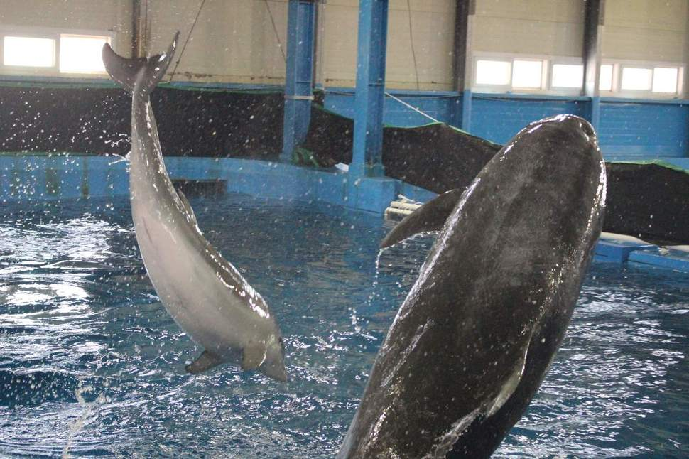 울산 장생포 고래생태체험관의 큰돌고래 울산 남구 제공