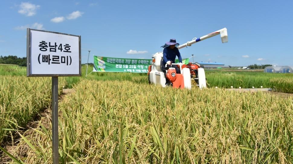 모내기 70일이면 수확…논농사 대박 예고 : 전국 : 사회 : 뉴스 : 한겨레