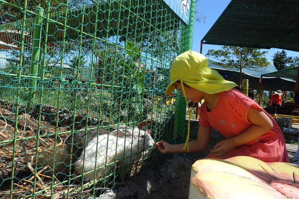 토끼나 돼지, 닭에게 과자로 먹이를 주는 체험 코스는 어린이들에게 인기다.