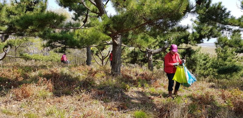 '안면 채종원' 산림자원의 관리·활용을 위한 사회적경제 거버넌스 구축 사업에 참여한 인근 마을 주민들이 고사리 등의 산나물을 채취하고 있다.  다울사회적협동조합 제공