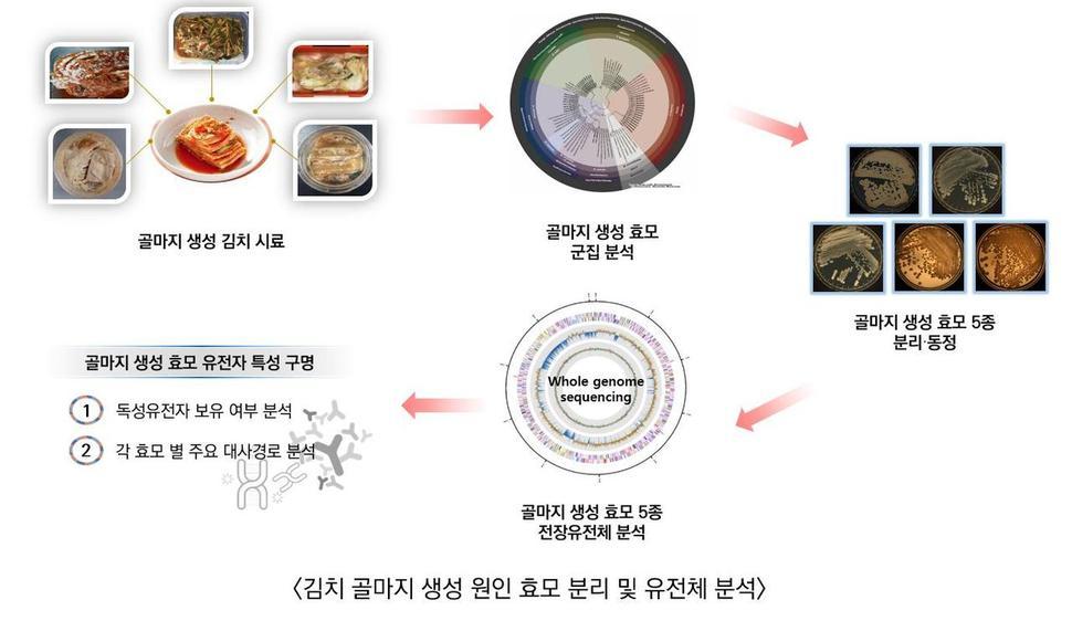 묵은 김치에 하얀 곰팡이? 효모가 만든 '골마지'