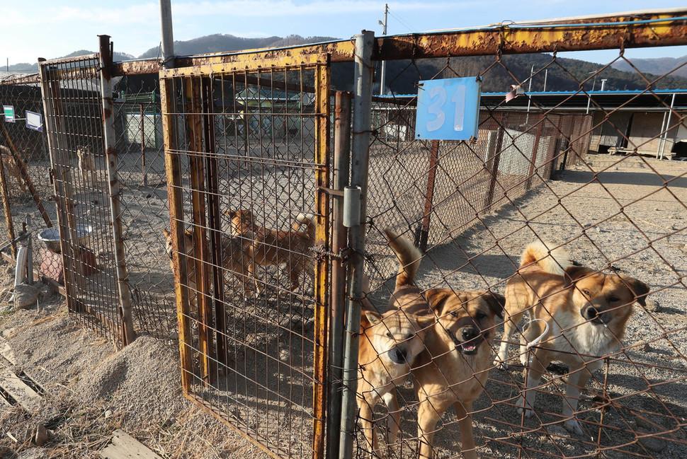 지난해 12월28일 오전 경기도 포천에 위치한 동물보호단체 '케어'의 구조견 보호소 모습. 포천/신소영 기자 viator@hani.co.kr