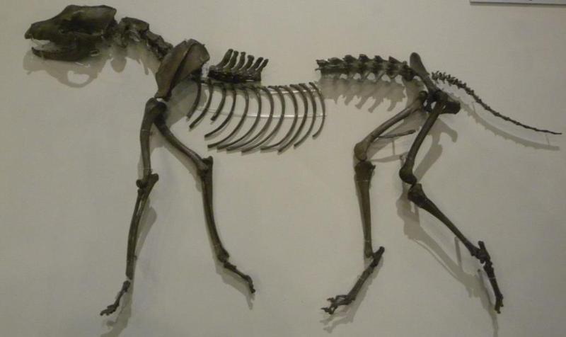 경주에 있는 통일신라시대 우물에서 발견된 개의 모형. 권오영 교수 제공