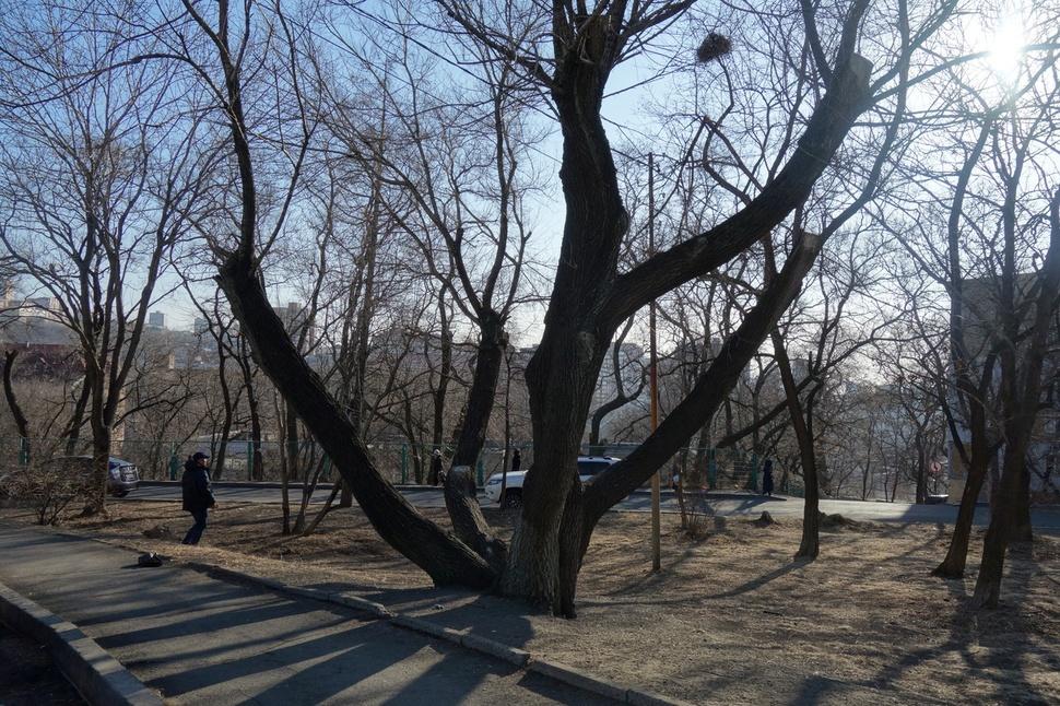 신한촌 독립문이 있던 장소인 블라디보스토크 하바롭스크 거리 5번지. 지금은 오래된 아파트 단지로 변해 있다. 최하얀 기자