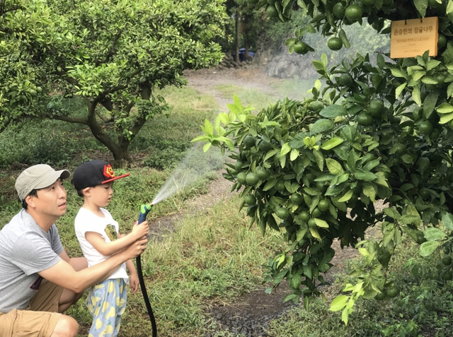 2017년 8월 '당신의 과수원' 애월 농장에서 가족 나무에 물을 주고 있는 회원가족들. 당신의 과수원 제공