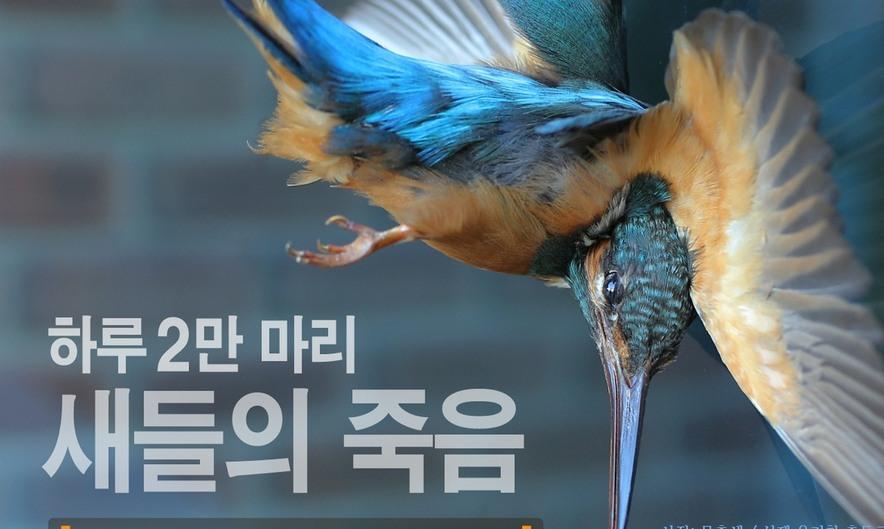 [카드뉴스] 하루 2만마리, 새들의 죽음