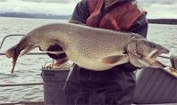 옐로스톤 호수에 '외래 물고기' 풀었더니 곰과 수달이 굶주려