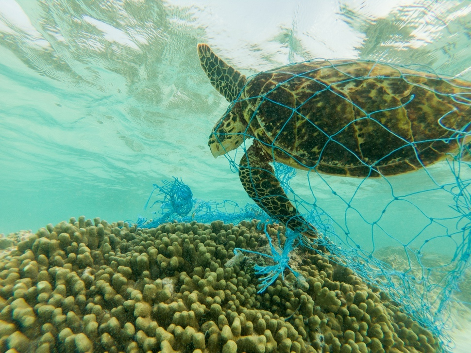 바다거북이 플라스틱으로 만들어진 그물에 걸려 신음하고 있다. 이엔브이컨텐츠 제공