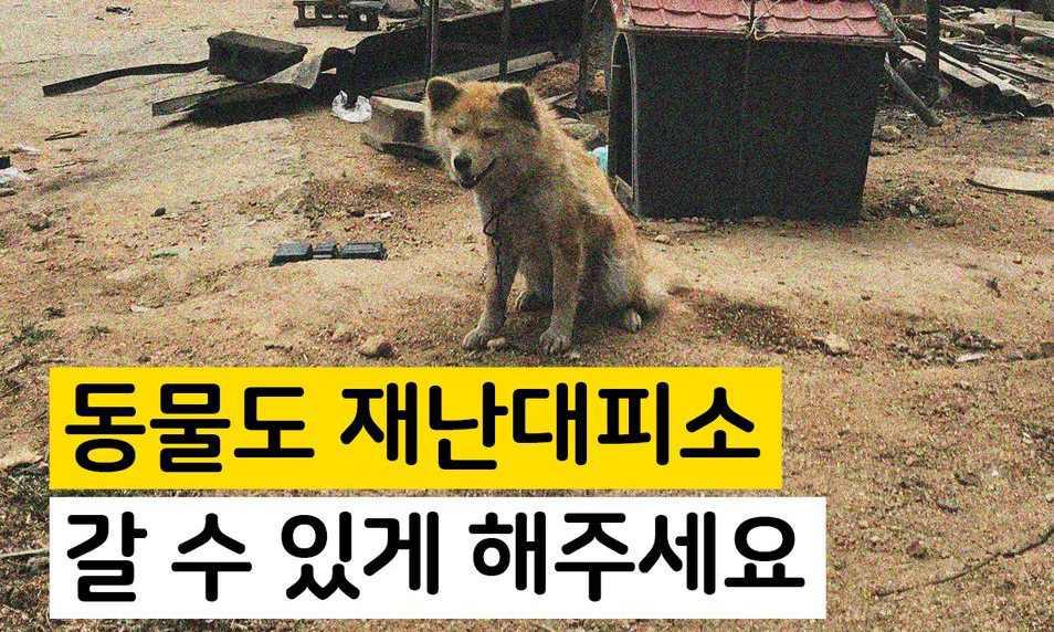[카드뉴스] 동물은 왜 재난대피소에 못 가나요?
