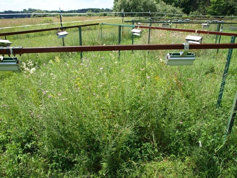 미국 연구팀이 야지에서 토착식물과 외래종이 온난 환경에 잘 적응하는지를 실험하고 있다. 미국 인디애나대 제공