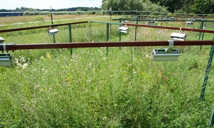 '악화가 양화 구축?' 온난화에 토착식물이 외래종보다 더 취약