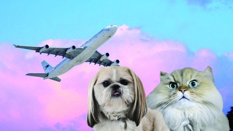 국내선의 경우 대부분의 항공사는 케이지를 포함한 반려동물의 무게가 7kg를 넘지 않으면 기내에 함께 탈 수 있다. 픽사베이, 클립아트코리아