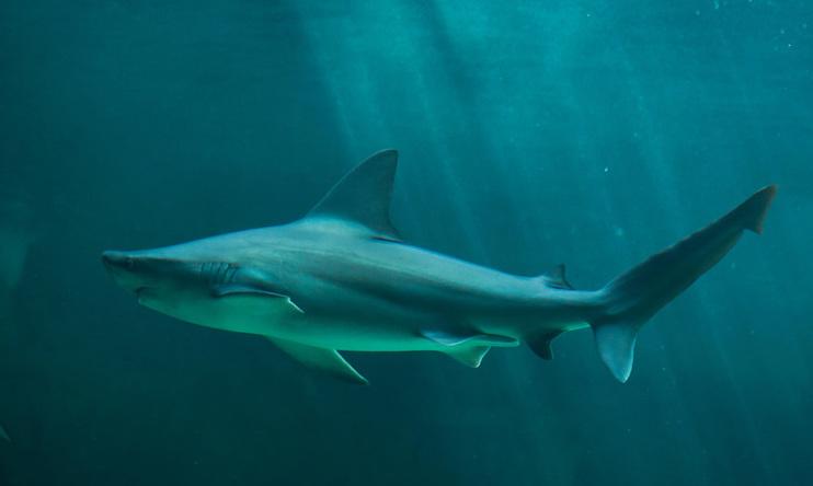 해수욕장에 상어가…누가 상어를 제주 앞바다로 불렀나