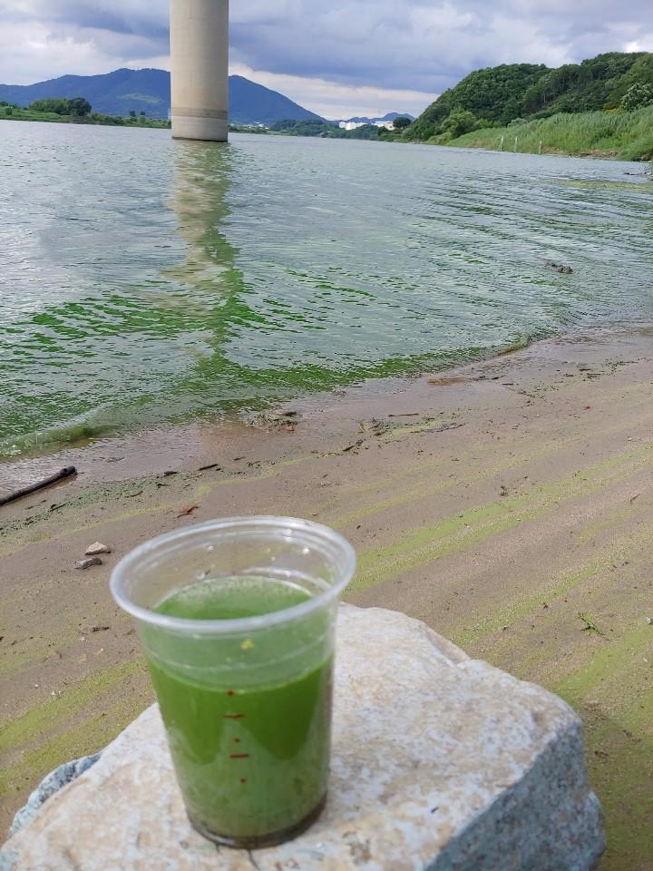 지난 11일 낙동강 합천창녕보 상류의 우곡 교 인근에서 취수한 낙동강 물. 녹조로 초록색이 선명 하다. 경남환경운동연합 제공