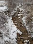 영하로 떨어진 날씨에도 얼지 않는 계곡엔 물속 곤충 '득실'