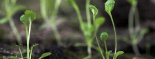 온난화 대처할 수있는 식물의 온도센서 찾았다